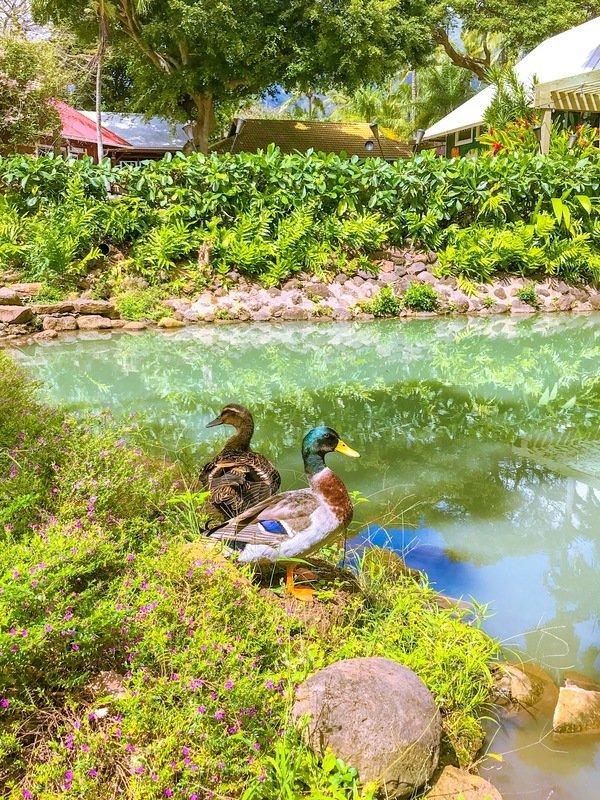 VISITING THE MAUI TROPICAL PLANTATION